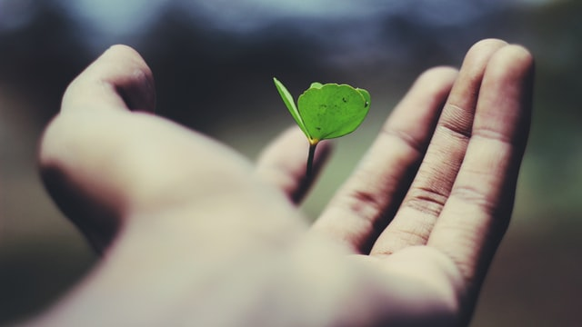 A hand holding a young plant signifying growth